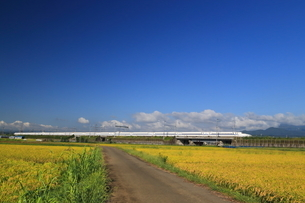 秋の田園を走る新幹線の写真素材 [FYI03005432]