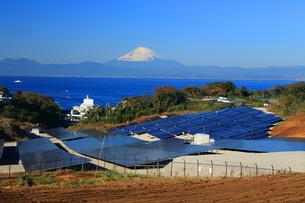 富士山の見える佐島が丘メガソーラープラントの写真素材 [FYI03005567]