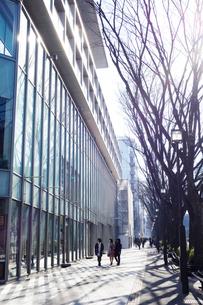 朝の表参道の写真素材 [FYI03005740]