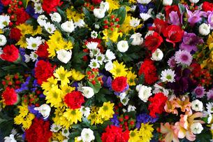 仏花の写真素材 [FYI03005767]