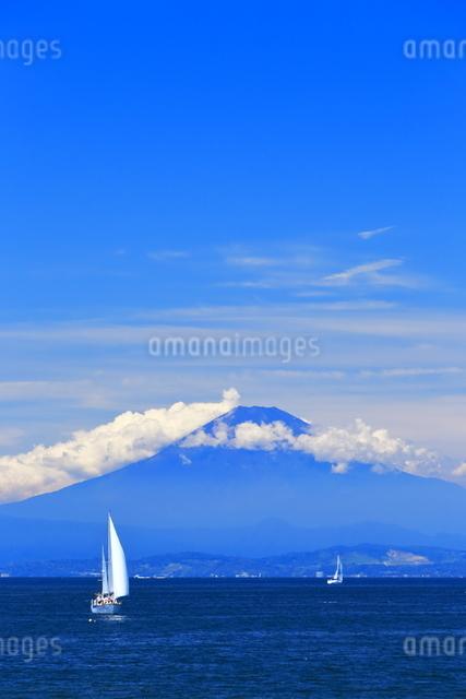 夏富士とヨットの写真素材 [FYI03005896]
