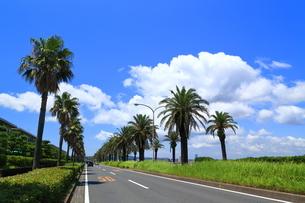 神奈川県 よこすか海岸通りの写真素材 [FYI03005982]