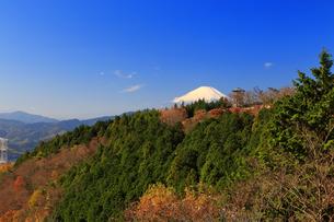 神奈川県 菜の花台から望む富士山の写真素材 [FYI03006110]