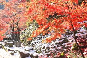 大山寺の紅葉の写真素材 [FYI03006141]
