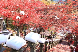 大山寺の紅葉の写真素材 [FYI03006143]