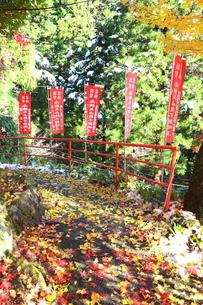 大山寺の紅葉の写真素材 [FYI03006144]