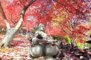大山寺の紅葉の写真素材 [FYI03006148]