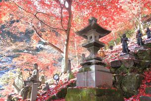大山寺の紅葉の写真素材 [FYI03006149]