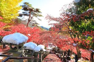 大山寺の紅葉の写真素材 [FYI03006152]