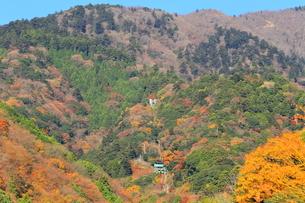 秋の大山ケーブルカーの写真素材 [FYI03006163]