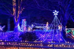 神奈川県 宮ヶ瀬のクリスマスイルミネーションの写真素材 [FYI03006206]