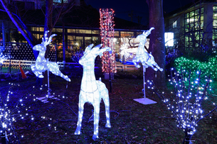 神奈川県 宮ヶ瀬のクリスマスイルミネーションの写真素材 [FYI03006233]