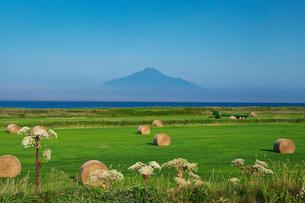 利尻島と日本海と牧草ロールの写真素材 [FYI03006299]