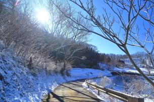 雪の降った秦野市の林道の写真素材 [FYI03006329]