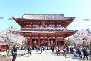 浅草寺の宝蔵門と桜の写真素材 [FYI03006358]