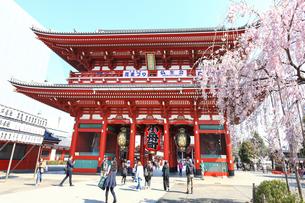 浅草寺の宝蔵門と桜の写真素材 [FYI03006359]