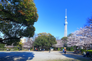 隅田公園の桜と東京スカイツリーの写真素材 [FYI03006381]