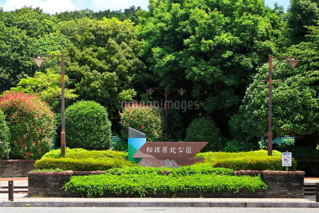 紫陽花園のある相模原北公園の写真素材 [FYI03006459]