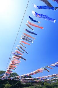 泳げ鯉のぼり相模川の写真素材 [FYI03006469]