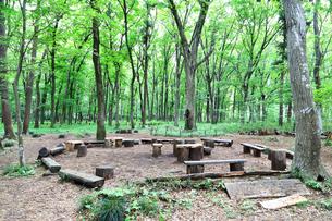 新緑の木もれびの森の写真素材 [FYI03006577]