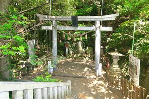 江の島 児玉神社の鳥居の写真素材 [FYI03006590]