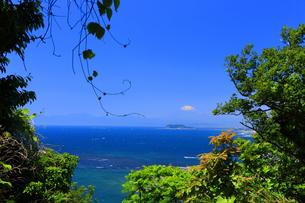 披露山公園から望む春の富士山と江の島の写真素材 [FYI03006599]