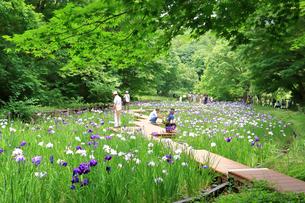 しょうぶ咲く四季の森公園の写真素材 [FYI03006621]