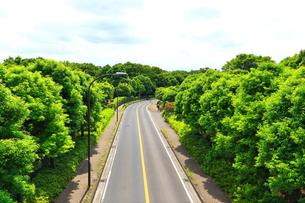 新緑を貫く道路の写真素材 [FYI03006623]