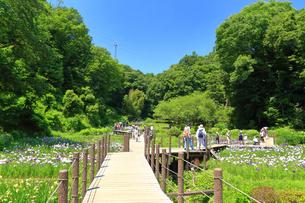 せせらぎ公園の菖蒲園の写真素材 [FYI03006651]