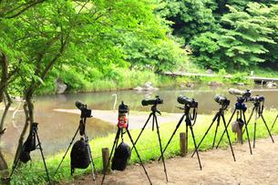 野鳥を狙うカメラの放列の写真素材 [FYI03006698]