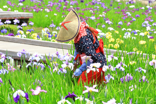 横須賀しょうぶ園の写真素材 [FYI03006715]