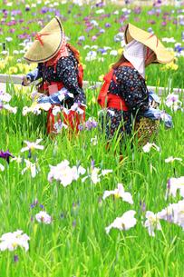 横須賀しょうぶ園の写真素材 [FYI03006716]