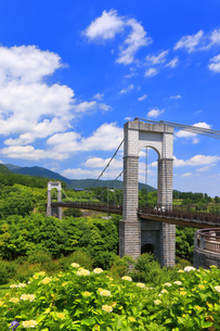秦野戸川公園の紫陽花の写真素材 [FYI03006752]