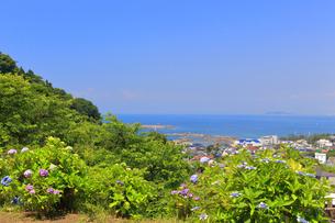 葉山のあじさい公園の写真素材 [FYI03006758]