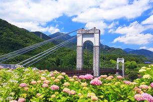 秦野戸川公園の紫陽花の写真素材 [FYI03006759]