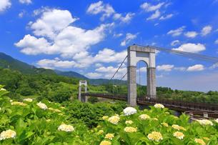 秦野戸川公園の紫陽花の写真素材 [FYI03006792]