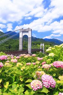 秦野戸川公園の紫陽花の写真素材 [FYI03006801]