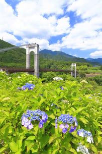 秦野戸川公園の紫陽花の写真素材 [FYI03006804]