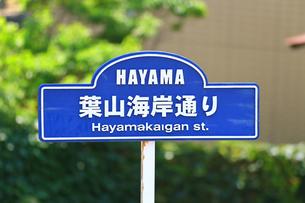 神奈川県 葉山海岸通りの写真素材 [FYI03006809]
