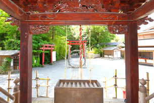 神奈川県 白笹稲荷神社の写真素材 [FYI03006818]