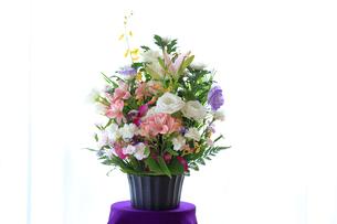 仏花の写真素材 [FYI03006851]