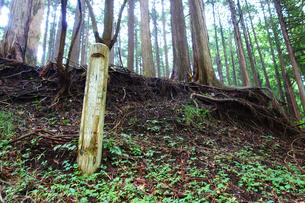 丹沢の原生林の写真素材 [FYI03006889]