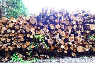 伐採された樹木の写真素材 [FYI03006890]