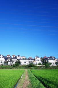 郊外の住宅街の写真素材 [FYI03006933]