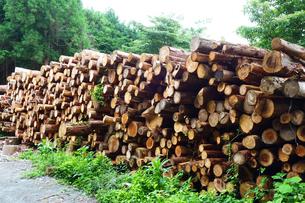 伐採された樹木の写真素材 [FYI03006939]