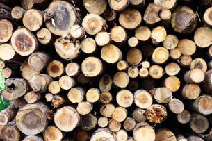 伐採された樹木の写真素材 [FYI03006946]