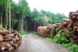 伐採された樹木の写真素材 [FYI03006947]