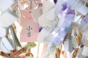 おみくじの写真素材 [FYI03007017]