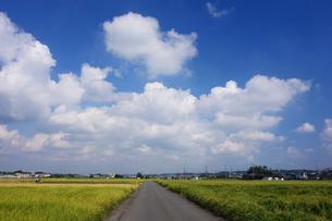 秋の田園地帯の写真素材 [FYI03007031]