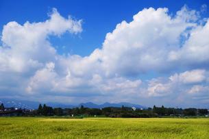 秋の田園地帯の写真素材 [FYI03007032]